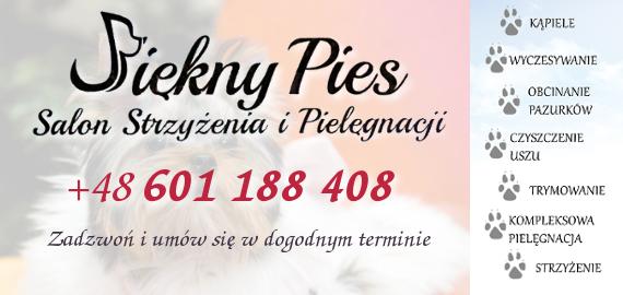 Piękny Pies Rzeszów: Strzyżenie psów, Stylizacja fryzur, Kosmetyka oczu, uszu i pazurków